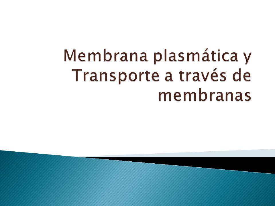 Involucra áreas de la membrana plasmática (Citosis) Invaginaciones y evaginaciones (citoesqueleto) Formación de vesículas