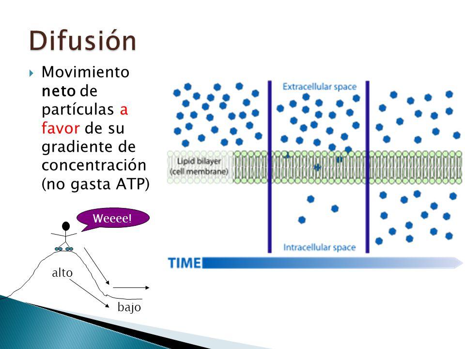 Movimiento neto de partículas a favor de su gradiente de concentración (no gasta ATP) alto bajo Weeee! !!