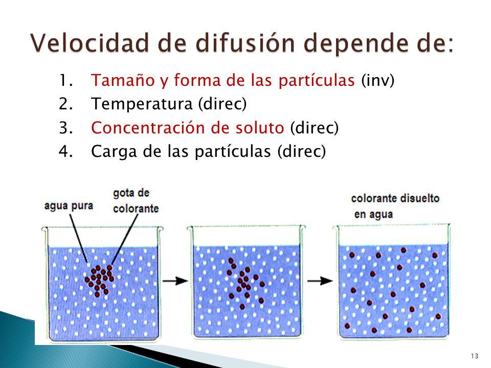 13 1.Tamaño y forma de las partículas (inv) 2.Temperatura (direc) 3.Concentración de soluto (direc) 4.Carga de las partículas (direc)