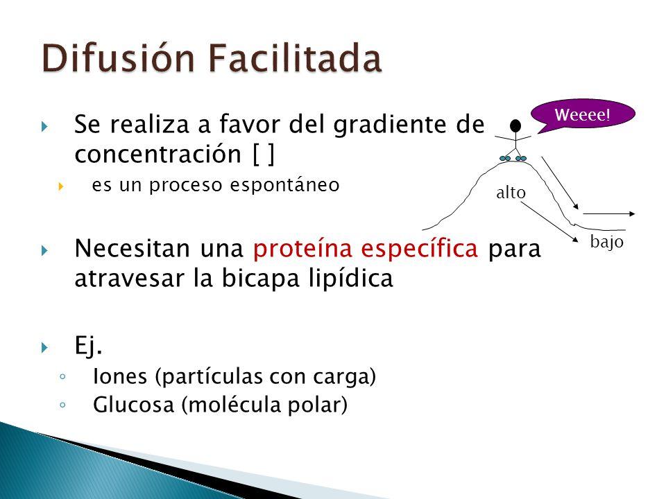 Se realiza a favor del gradiente de concentración [ ] es un proceso espontáneo Necesitan una proteína específica para atravesar la bicapa lipídica Ej.