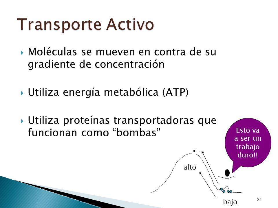 Moléculas se mueven en contra de su gradiente de concentración Utiliza energía metabólica (ATP) Utiliza proteínas transportadoras que funcionan como b