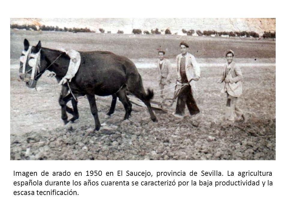 Imagen de arado en 1950 en El Saucejo, provincia de Sevilla.