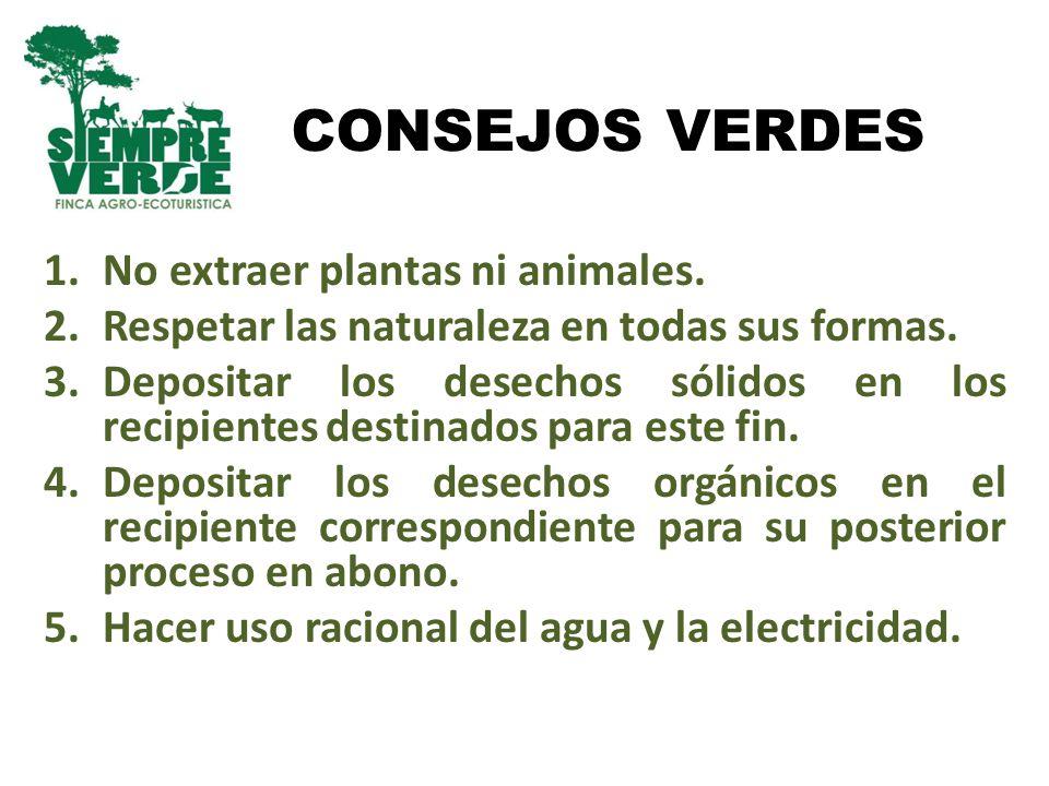 CONSEJOS VERDES 1.No extraer plantas ni animales. 2.Respetar las naturaleza en todas sus formas. 3.Depositar los desechos sólidos en los recipientes d