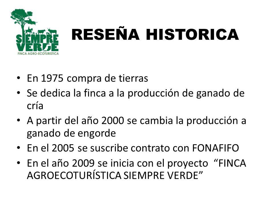 RESEÑA HISTORICA En 1975 compra de tierras Se dedica la finca a la producción de ganado de cría A partir del año 2000 se cambia la producción a ganado