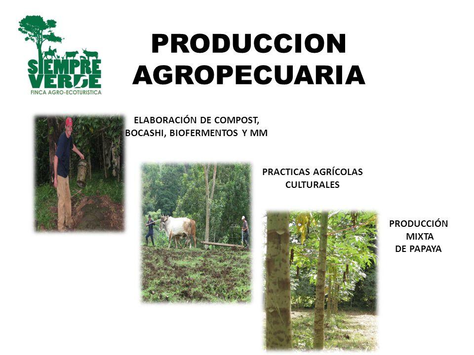 PRODUCCION AGROPECUARIA ELABORACIÓN DE COMPOST, BOCASHI, BIOFERMENTOS Y MM PRACTICAS AGRÍCOLAS CULTURALES PRODUCCIÓN MIXTA DE PAPAYA