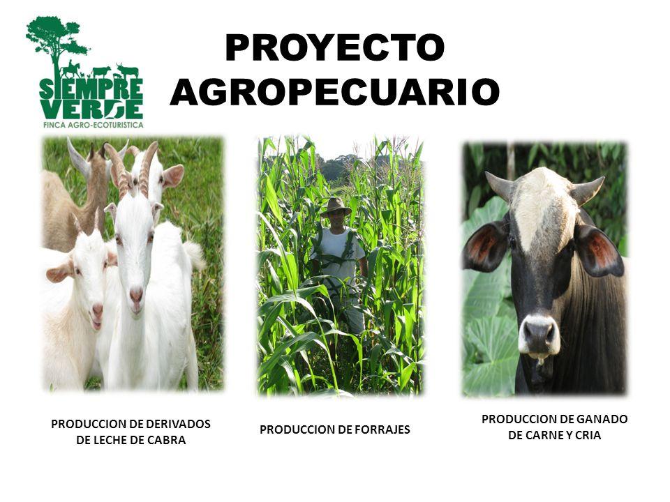 REFORESTACION Bosque protegido por el Servicio de Pagos Ambientales de FONAFIFO Proyectos de reforestación en las riveras de los ríos