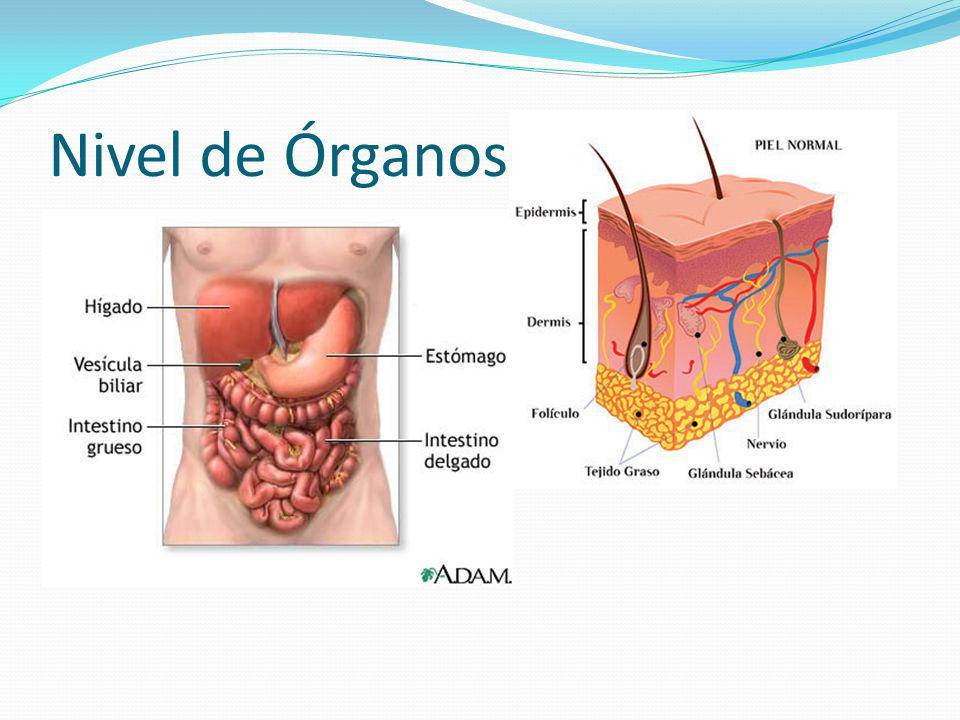 Nivel de Órganos