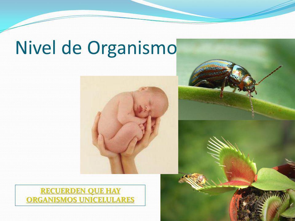 Nivel de Organismo RECUERDEN QUE HAY ORGANISMOS UNICELULARES RECUERDEN QUE HAY ORGANISMOS UNICELULARES