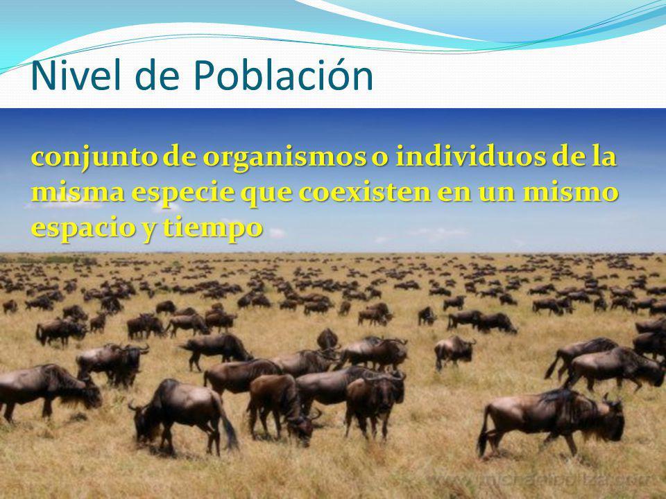 Nivel de Población conjunto de organismos o individuos de la misma especie que coexisten en un mismo espacio y tiempo