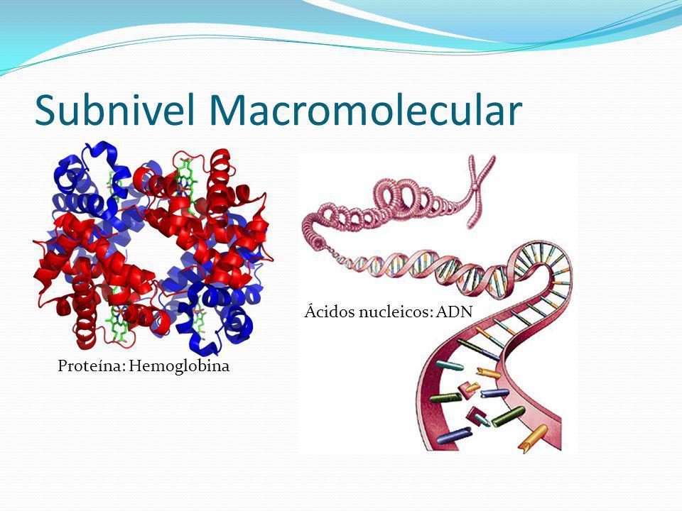 Subnivel Macromolecular Proteína: Hemoglobina Ácidos nucleicos: ADN