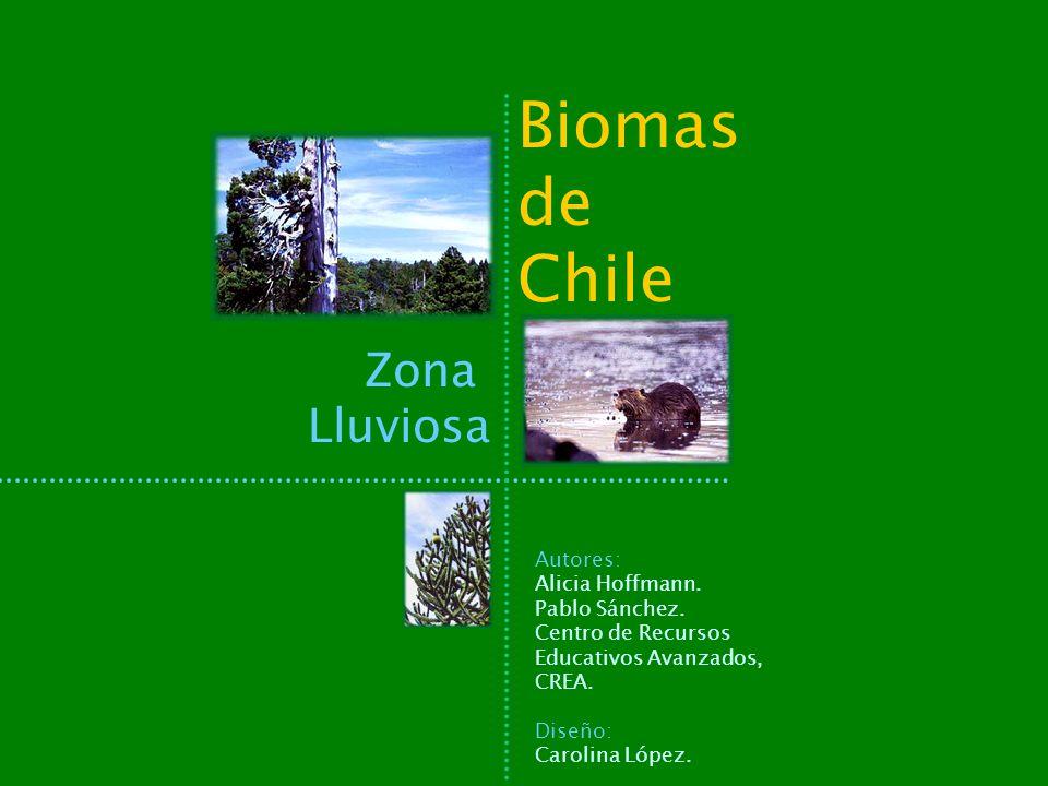Biomas de Chile Zona Lluviosa Autores: Alicia Hoffmann. Pablo Sánchez. Centro de Recursos Educativos Avanzados, CREA. Diseño: Carolina López.