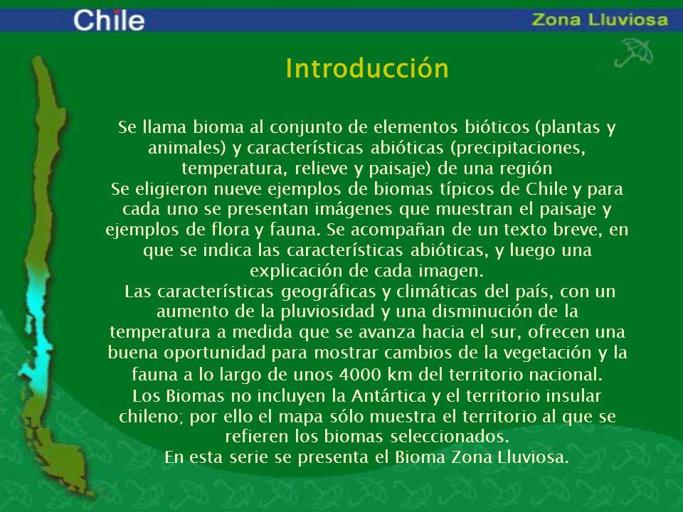 Introducción Se llama bioma al conjunto de elementos bióticos (plantas y animales) y características abióticas (precipitaciones, temperatura, relieve