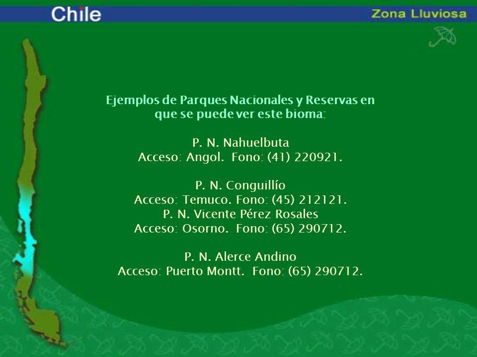 Ejemplos de Parques Nacionales y Reservas en que se puede ver este bioma: P. N. Nahuelbuta Acceso: Angol. Fono: (41) 220921. P. N. Conguillío Acceso: