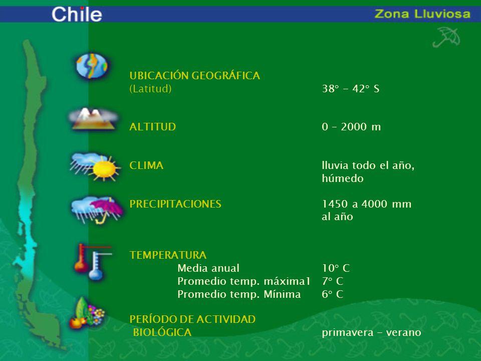 UBICACIÓN GEOGRÁFICA (Latitud)38° - 42° S ALTITUD0 – 2000 m CLIMAlluvia todo el año, húmedo PRECIPITACIONES1450 a 4000 mm al año TEMPERATURA Media anu