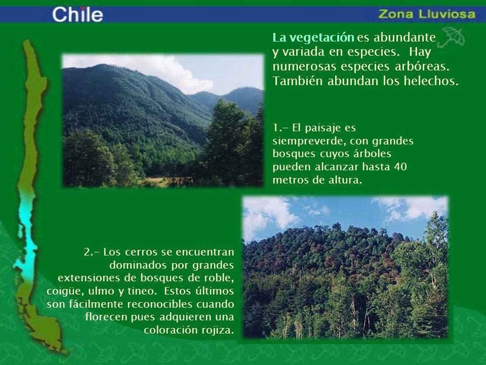 La vegetación es abundante y variada en especies. Hay numerosas especies arbóreas. También abundan los helechos. 1.- El paisaje es siempreverde, con g