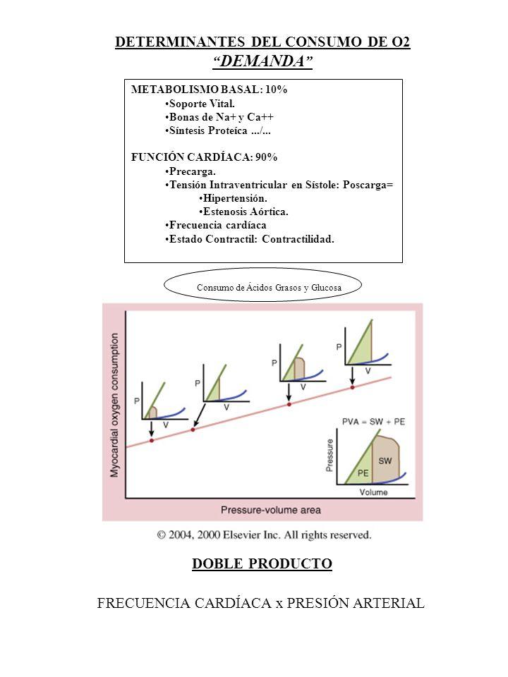 DETERMINANTES DEL CONSUMO DE O2 DEMANDA METABOLISMO BASAL: 10% Soporte Vital. Bonas de Na+ y Ca++ Síntesis Proteíca.../... FUNCIÓN CARDÍACA: 90% Preca