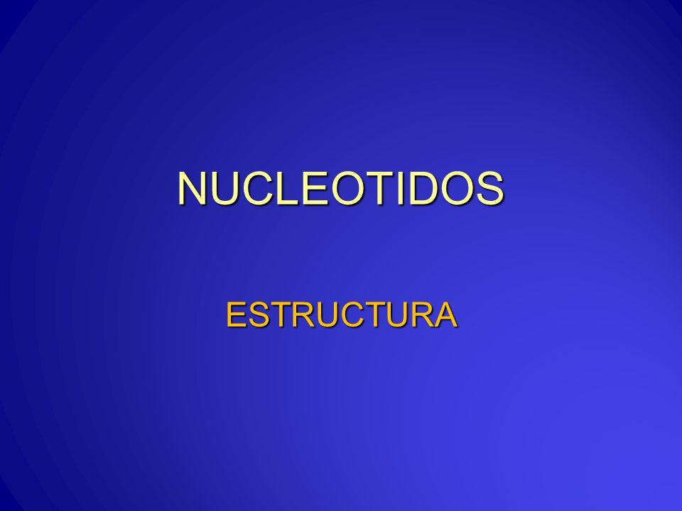 NUCLEOTIDOS ESTRUCTURA