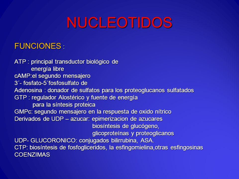 NUCLEOTIDOS FUNCIONES : ATP : principal transductor biológico de energía libre energía libre cAMP:el segundo mensajero 3´- fosfato-5´fosfosulfato de Adenosina : donador de sulfatos para los proteoglucanos sulfatados GTP : regulador Alostérico y fuente de energía para la síntesis proteica para la síntesis proteica GMPc: segundo mensajero en la respuesta de oxido nítrico Derivados de UDP – azucar: epimerizacion de azucares biosíntesis de glucógeno, biosíntesis de glucógeno, glicoproteínas y proteoglicanos glicoproteínas y proteoglicanos UDP- GLUCORONICO: conjugados bilirrubina, ASA.