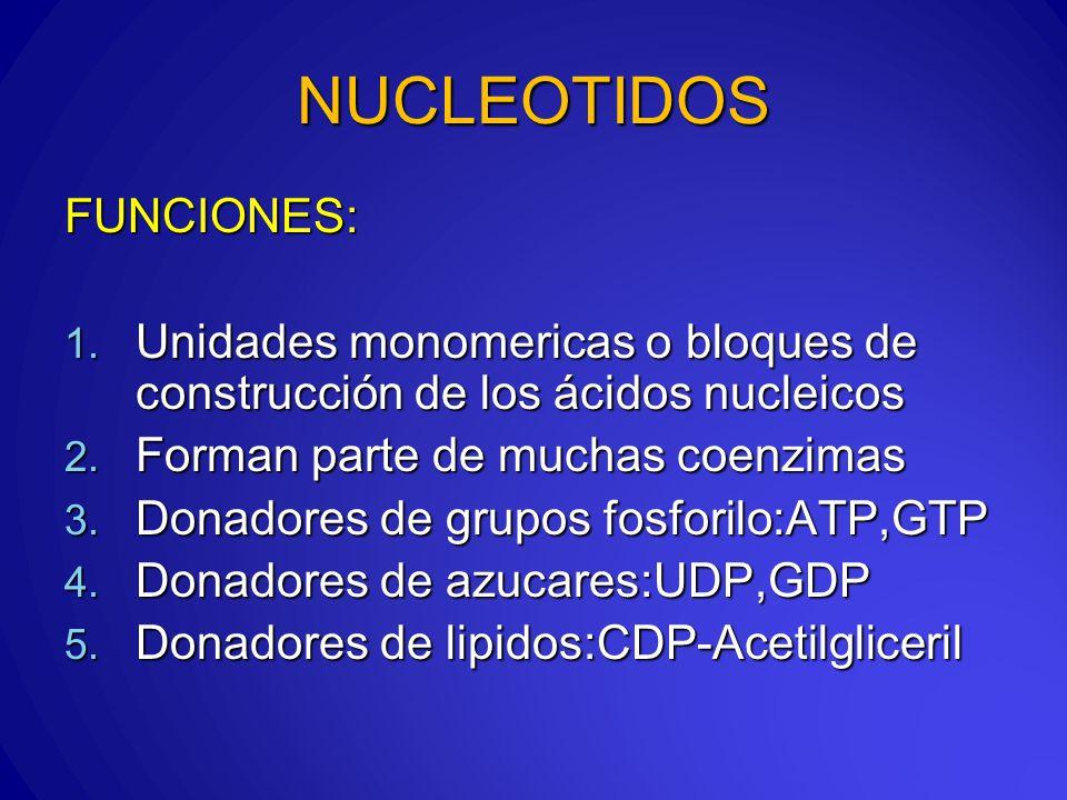 NUCLEOTIDOS FUNCIONES: 1.Unidades monomericas o bloques de construcción de los ácidos nucleicos 2.