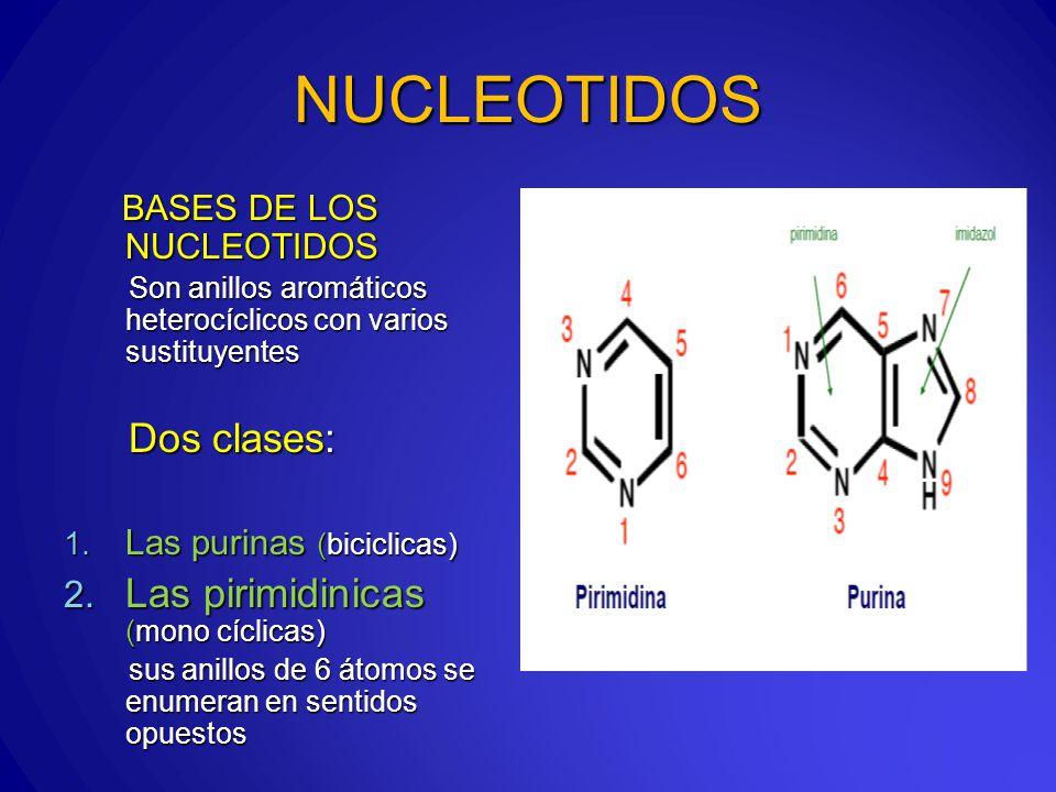 NUCLEOTIDOS BASES DE LOS NUCLEOTIDOS BASES DE LOS NUCLEOTIDOS Son anillos aromáticos heterocíclicos con varios sustituyentes Son anillos aromáticos heterocíclicos con varios sustituyentes Dos clases: Dos clases: 1.