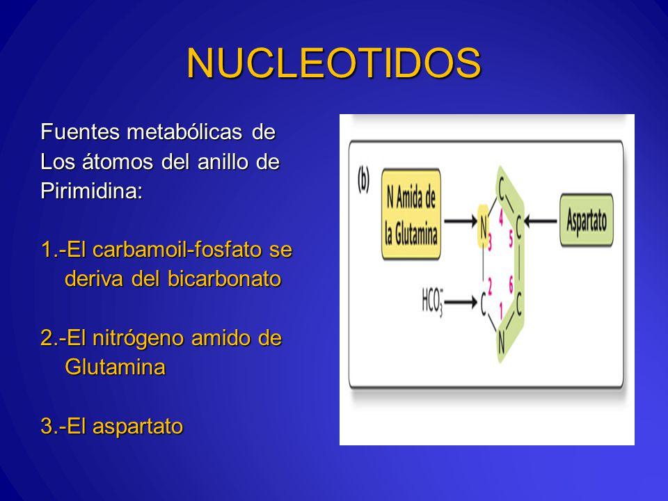Fuentes metabólicas de Los átomos del anillo de Pirimidina: 1.-El carbamoil-fosfato se deriva del bicarbonato deriva del bicarbonato 2.-El nitrógeno amido de Glutamina Glutamina 3.-El aspartato NUCLEOTIDOS
