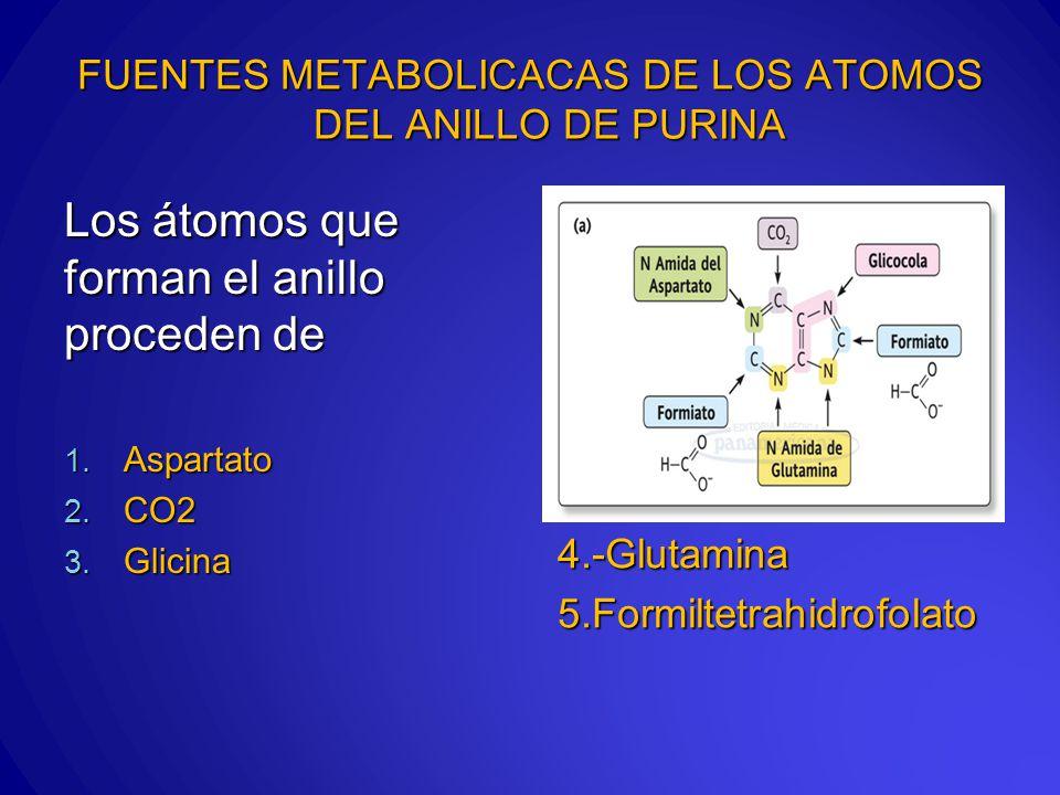 FUENTES METABOLICACAS DE LOS ATOMOS DEL ANILLO DE PURINA Los átomos que forman el anillo proceden de 1.