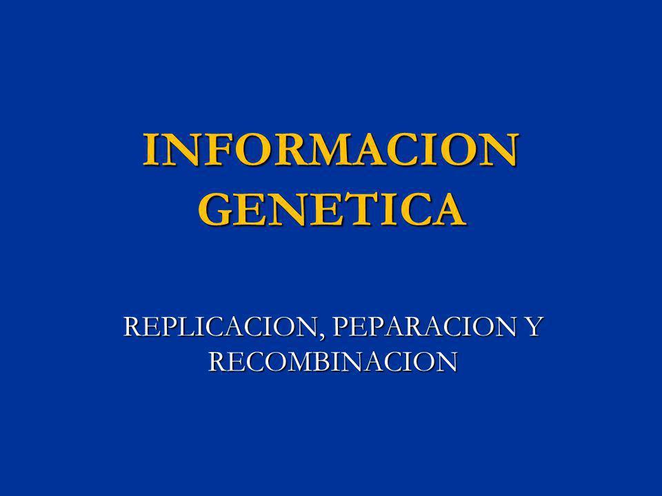INFORMACION GENETICA REPLICACION, PEPARACION Y RECOMBINACION