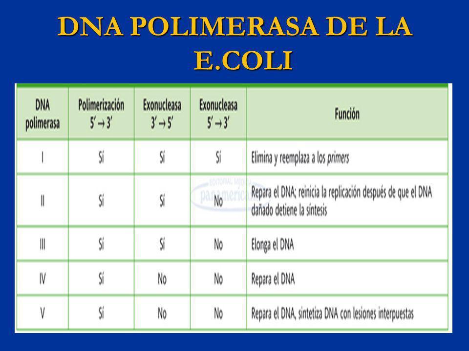 DNA POLIMERASA DE LA E.COLI
