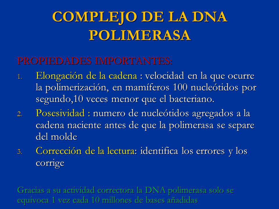 COMPLEJO DE LA DNA POLIMERASA PROPIEDADES IMPORTANTES: 1. Elongación de la cadena : velocidad en la que ocurre la polimerización, en mamíferos 100 nuc