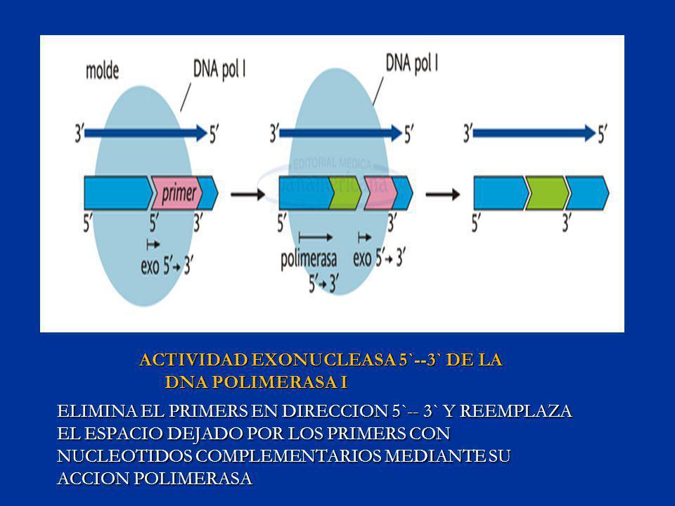 ACTIVIDAD EXONUCLEASA 5`--3` DE LA DNA POLIMERASA I ELIMINA EL PRIMERS EN DIRECCION 5`-- 3` Y REEMPLAZA EL ESPACIO DEJADO POR LOS PRIMERS CON NUCLEOTI