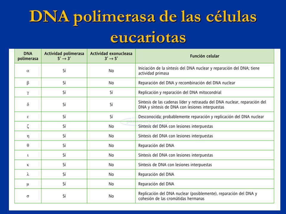 DNA polimerasa de las células eucariotas