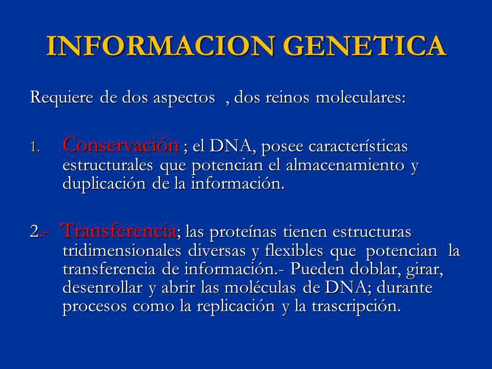 ACTIVIDAD DE CORRECCION DURANTE LA LECTURA DE LA DNA POLIMERAZA LA DNA polimerasa aparea nucleótidos durante la replicación del DNA con un alto índice de precisión.