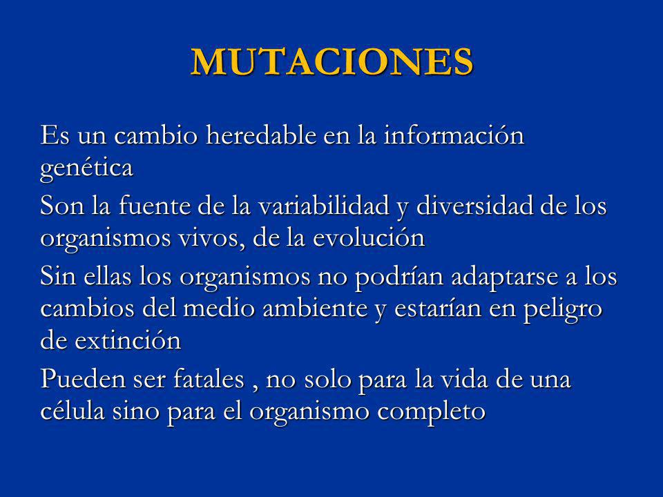 MUTACIONES Es un cambio heredable en la información genética Son la fuente de la variabilidad y diversidad de los organismos vivos, de la evolución Si