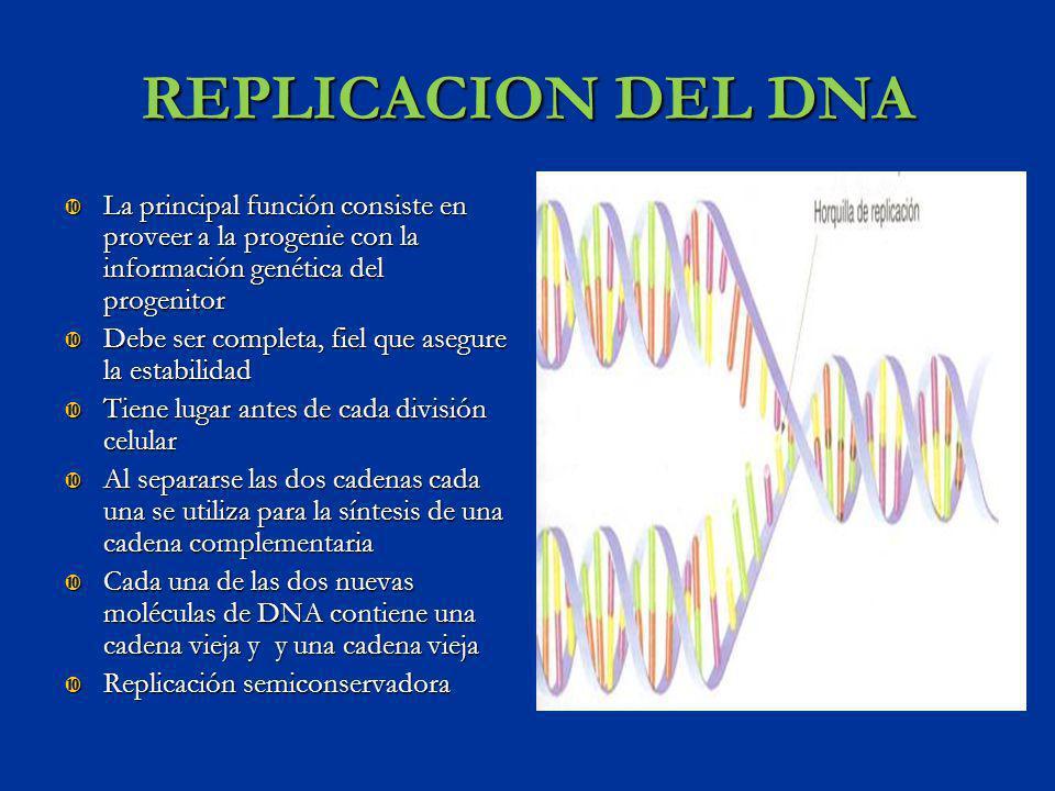 REPLICACION DEL DNA La principal función consiste en proveer a la progenie con la información genética del progenitor La principal función consiste en
