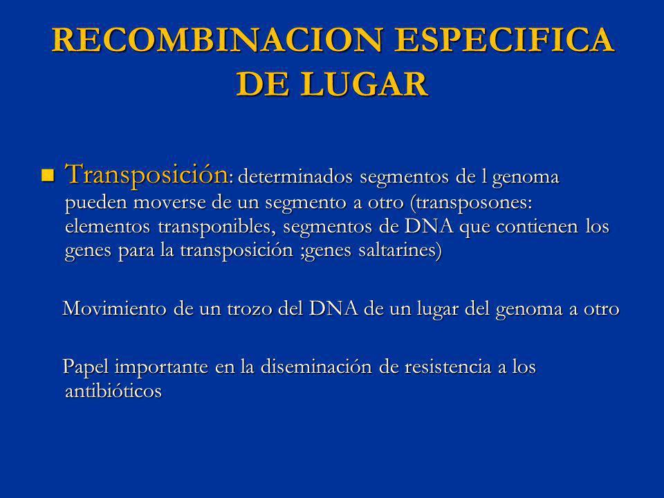 RECOMBINACION ESPECIFICA DE LUGAR Transposición : determinados segmentos de l genoma pueden moverse de un segmento a otro (transposones: elementos tra