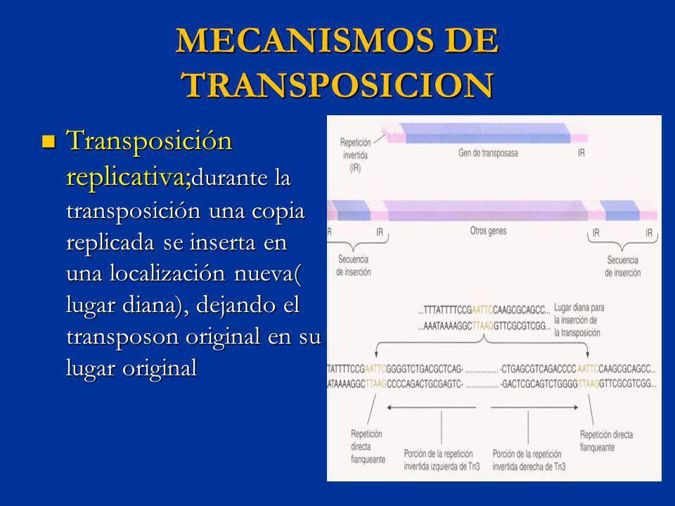 MECANISMOS DE TRANSPOSICION Transposición replicativa; durante la transposición una copia replicada se inserta en una localización nueva( lugar diana)