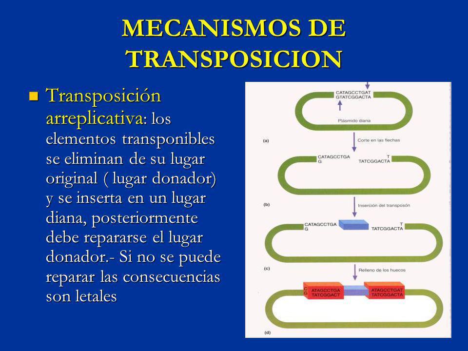 MECANISMOS DE TRANSPOSICION Transposición arreplicativa : los elementos transponibles se eliminan de su lugar original ( lugar donador) y se inserta e