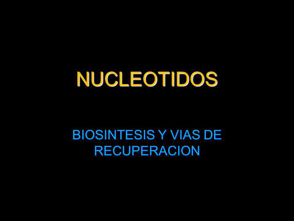 NUCLEOTIDOS DE PURINA Y PIRIMIDINA Los tejidos del hombre sintetizan purinas y pirimidinas.