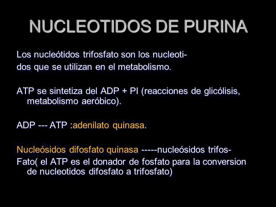 NUCLEOTIDOS DE PURINA Los nucleótidos trifosfato son los nucleoti- dos que se utilizan en el metabolismo. ATP se sintetiza del ADP + PI (reacciones de