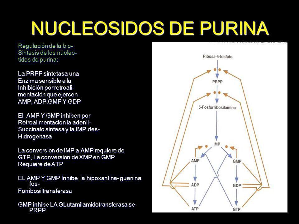 NUCLEOSIDOS DE PURINA Regulación de la bio- Sintesis de los nucleo- tidos de purina: La PRPP sintetasa una Enzima sensible a la Inhibición por retroal