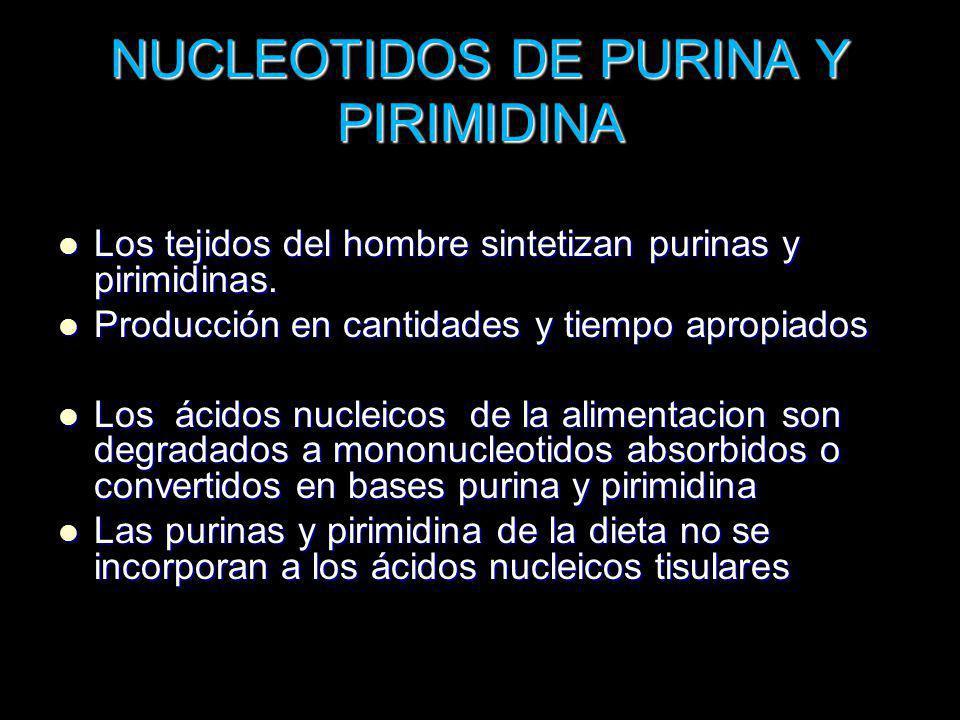 NUCLEOTIDOS DE PURINA Y PIRIMIDINA Los tejidos del hombre sintetizan purinas y pirimidinas. Los tejidos del hombre sintetizan purinas y pirimidinas. P