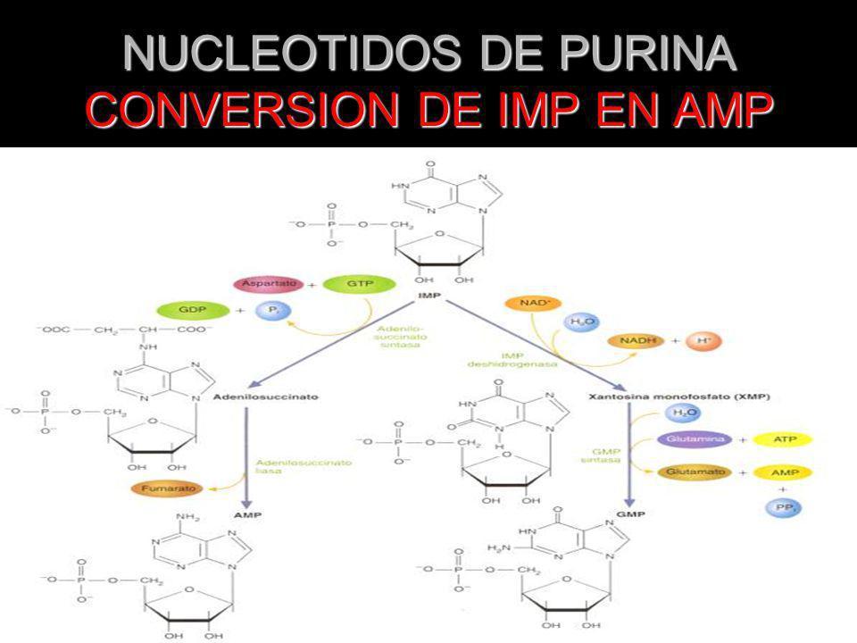 BIOSINTESIS NUCLEOTIDOS DE PIRIMIDINA El metrotexate inhibe la dihidrofolato reductasa El metrotexate inhibe la dihidrofolato reductasa Ciertos análogos de pirimidina son sustratos para las enzimas de la biosíntesis de nucleótidos de pirimidina Ciertos análogos de pirimidina son sustratos para las enzimas de la biosíntesis de nucleótidos de pirimidina
