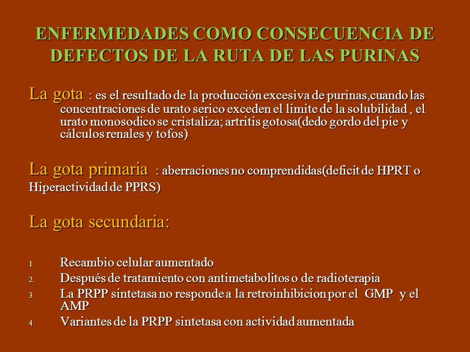 ENFERMEDADES COMO CONSECUENCIA DE DEFECTOS DE LA RUTA DE LAS PURINAS La gota : es el resultado de la producción excesiva de purinas,cuando las concent
