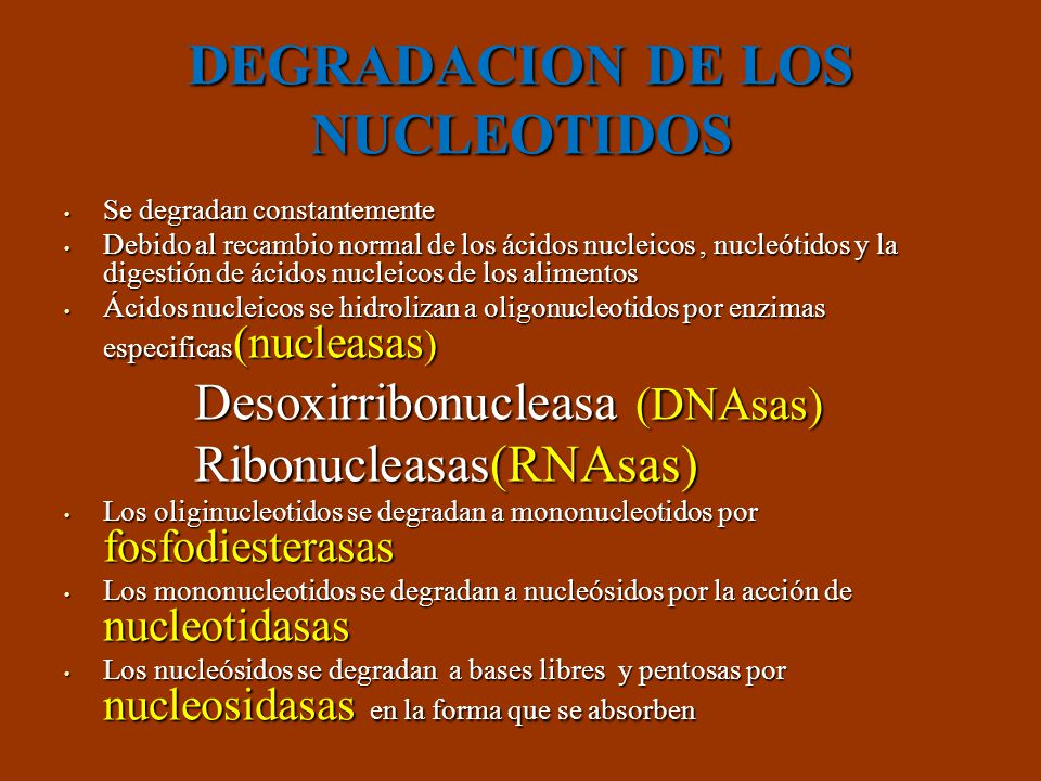DEGRADACION DE NUCLEOTIDOS Ácidos nucleicos Ácidos nucleicos Hidrólisis DNAsas/RNAsas Hidrólisis DNAsas/RNAsas Oligonucleótidos Oligonucleótidos Fosfodiesterasa Fosfodiesterasa Mono nucleótidos Mono nucleótidos Eliminación fosfato Nucleotidasas Eliminación fosfato Nucleotidasas Nucleósidos Absorción intestinal Nucleósidos Absorción intestinal Nucleosidasas Nucleosidasas Bases libres Ribosa o Desoxirribosa Bases libres Ribosa o Desoxirribosa Sintetizar ácidos nucleicos Sintetizar ácidos nucleicos Degradación en el enterocito Degradación en el enterocito