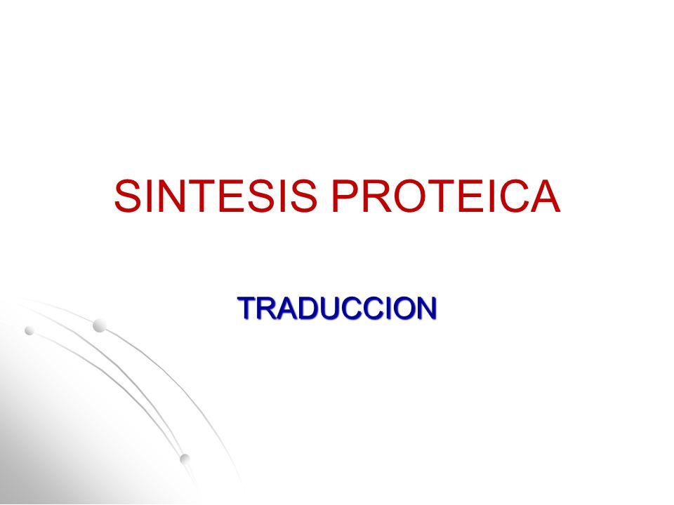 SINTESIS PROTEICA TRADUCCION