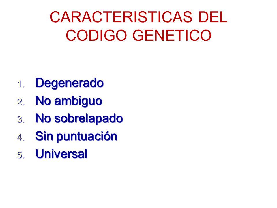 EL CODIGO GENETICO ES DEGENERADO Sistema de codificación degenerado cuando diversas señales tienen el mismo significado Sistema de codificación degenerado cuando diversas señales tienen el mismo significado Parcialmente degenerado debido a que la mayoría de los aminoácidos están codificados por varios codones Parcialmente degenerado debido a que la mayoría de los aminoácidos están codificados por varios codones 3 de 64 posibles codones no codifican para aminoácidos específicos (codones sin sentido : señales de terminación) 3 de 64 posibles codones no codifican para aminoácidos específicos (codones sin sentido : señales de terminación) Leucina y serina codificada por 6 codones diferentes Leucina y serina codificada por 6 codones diferentes La metionina y el triptofano son los únicos aminoácidos que están codificadas por un único codon La metionina y el triptofano son los únicos aminoácidos que están codificadas por un único codon El tercer nucleótido en un codón es menos importante que los dos primeros( causa principal) El tercer nucleótido en un codón es menos importante que los dos primeros( causa principal)