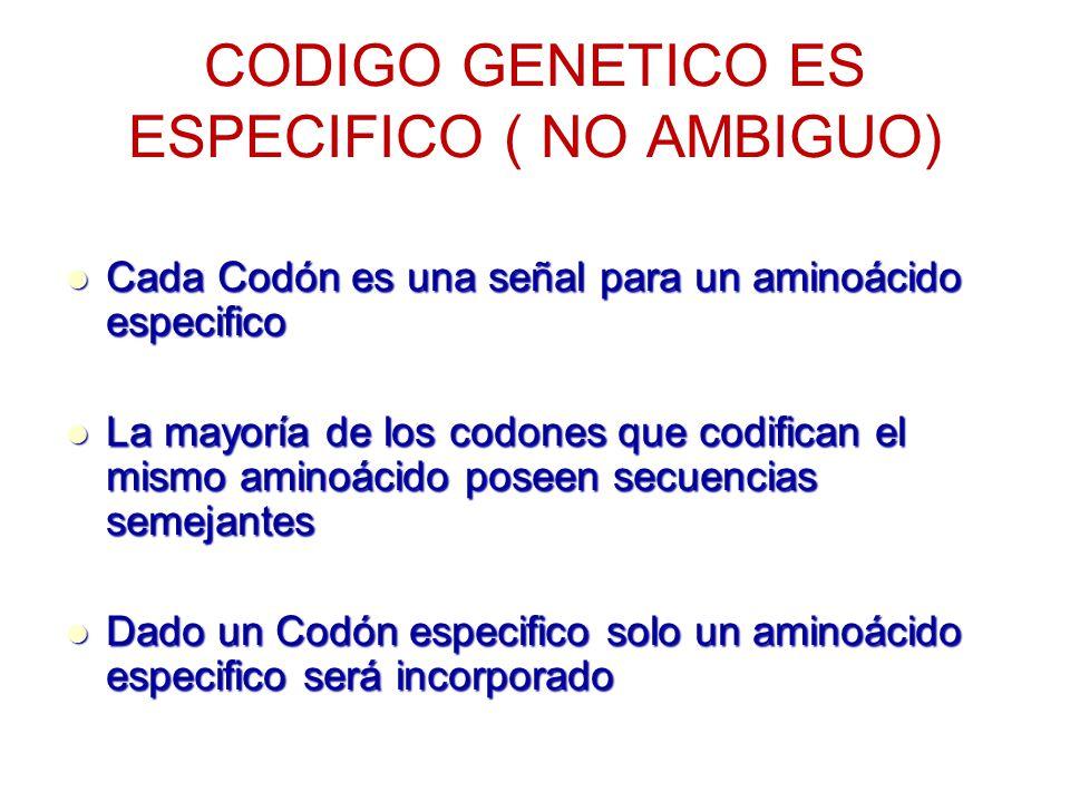 CODIGO GENETICO ES ESPECIFICO ( NO AMBIGUO) Cada Codón es una señal para un aminoácido especifico Cada Codón es una señal para un aminoácido especific