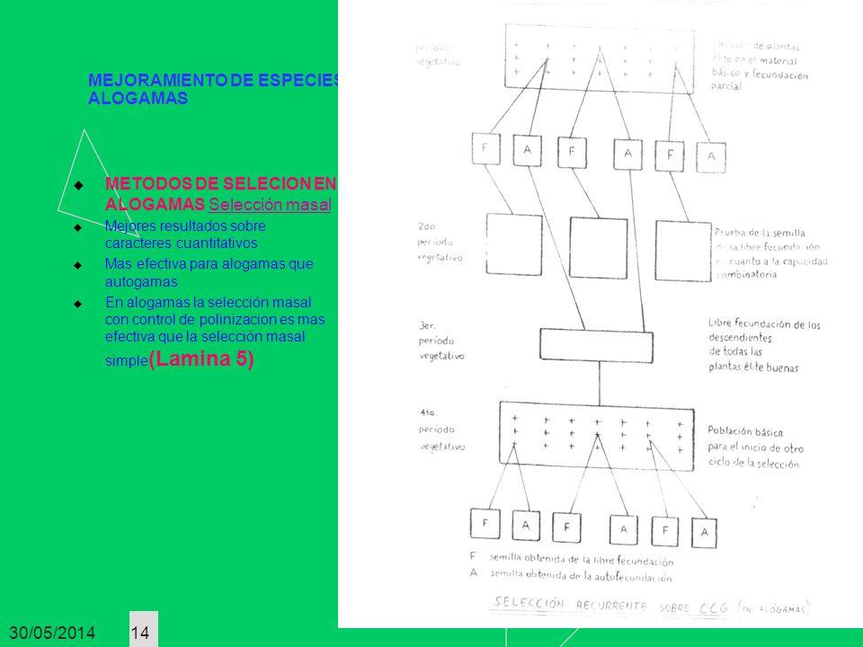 30/05/2014 14 MEJORAMIENTO DE ESPECIES ALOGAMAS METODOS DE SELECION EN ALOGAMAS Selección masal Mejores resultados sobre caracteres cuantitativos Mas