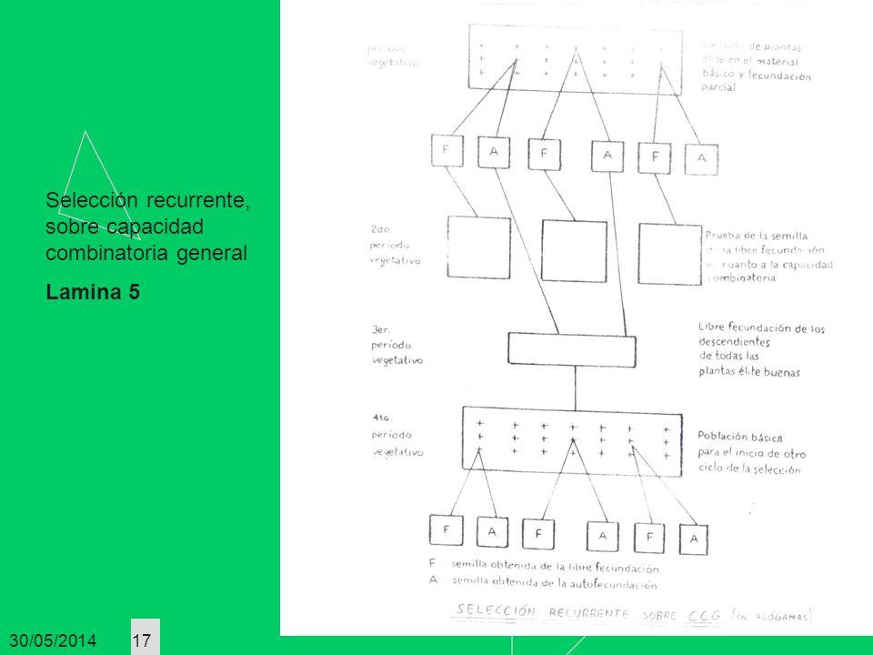 30/05/2014 17 Selección recurrente, sobre capacidad combinatoria general Lamina 5