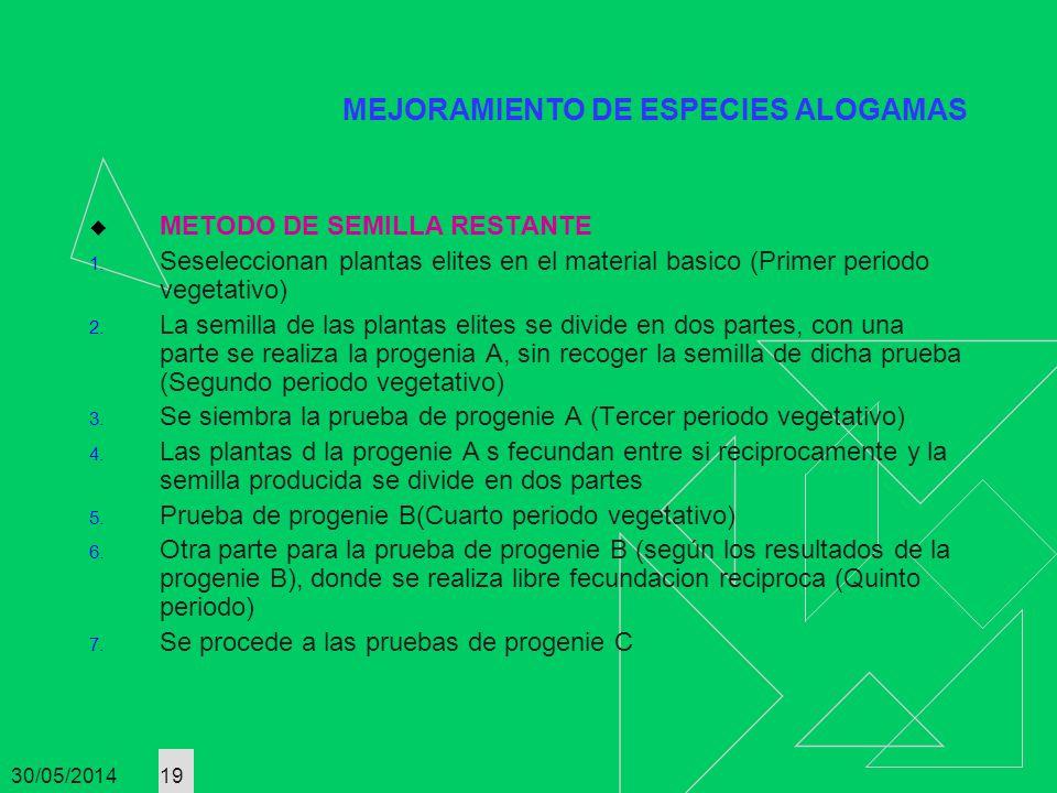 30/05/2014 19 MEJORAMIENTO DE ESPECIES ALOGAMAS METODO DE SEMILLA RESTANTE 1. Seseleccionan plantas elites en el material basico (Primer periodo veget